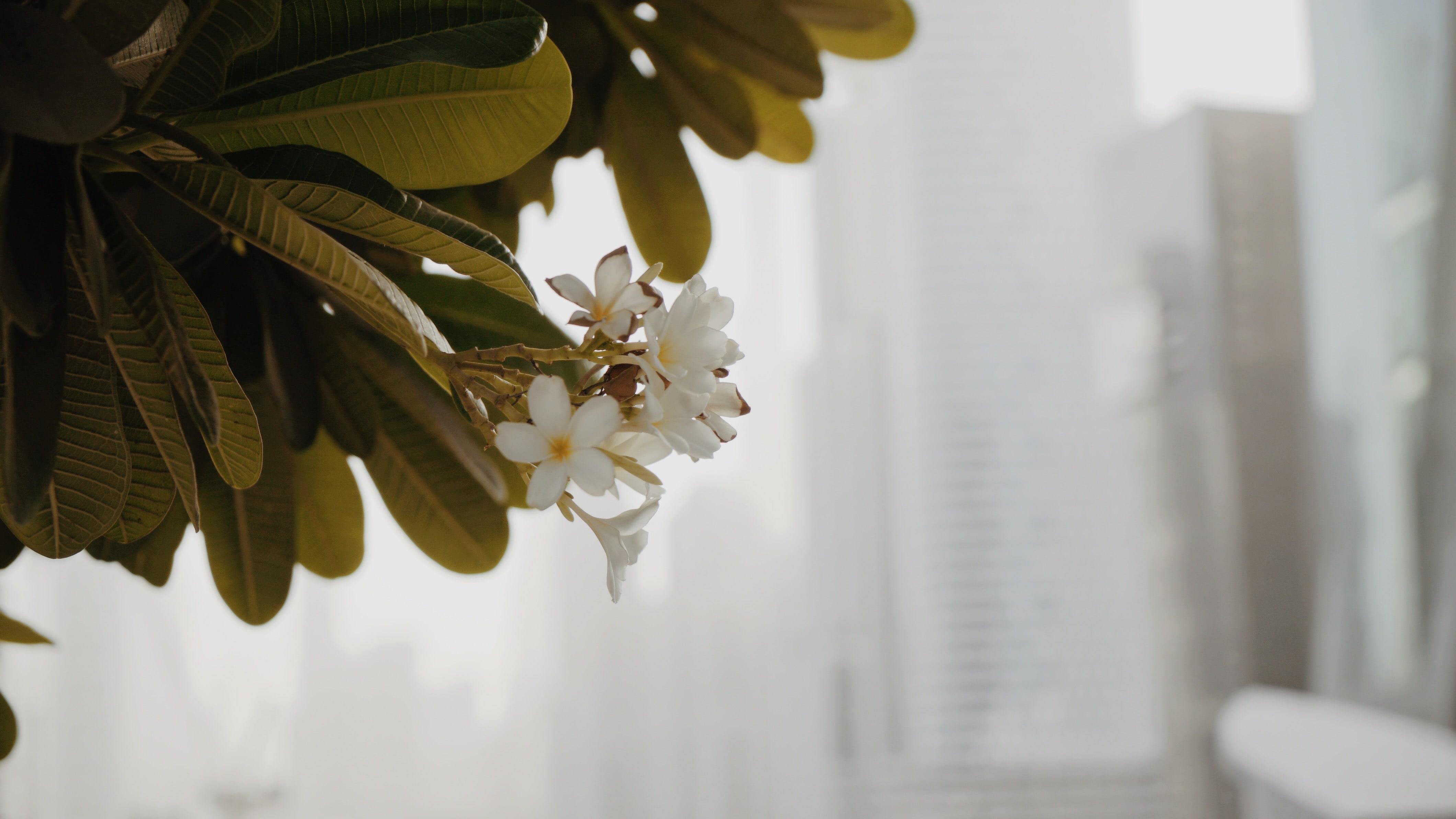 Blume in Dubai